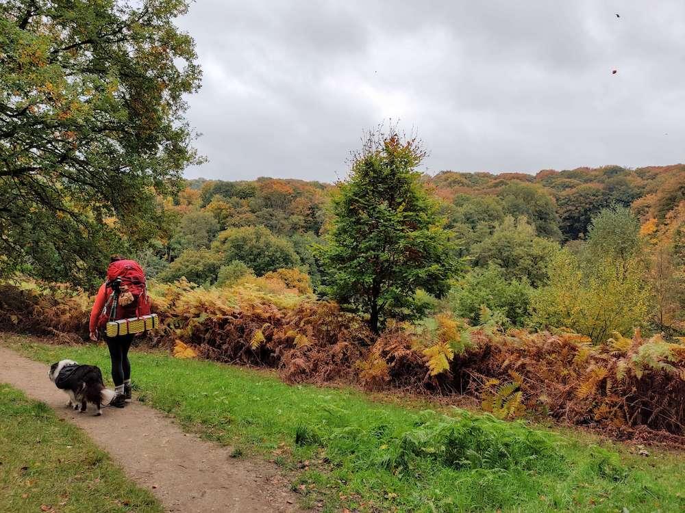 Filosofendal bij Berg en Dal met een uitkijk over de bossen en de warme herfstkleuren