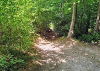 stijle heuvel in de Zuid-Limburgse bossen