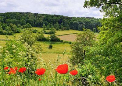 Klaprosen staan in de bloei met op de achtergrond het heuvellandschap van Zuid-Limburg